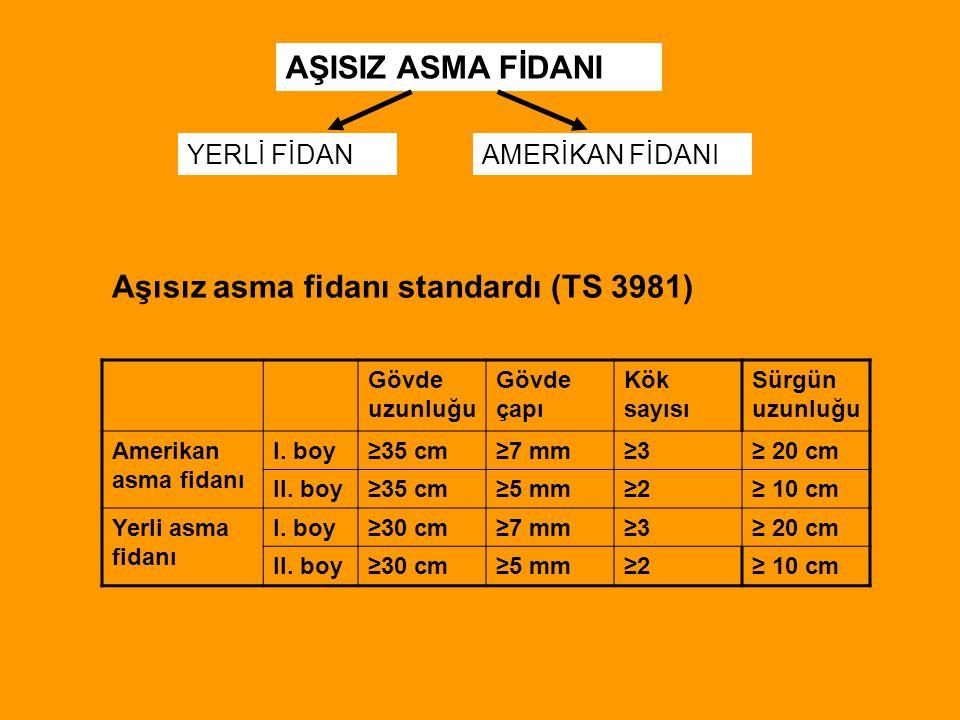 Aşısız asma fidanı standardı (TS 3981)