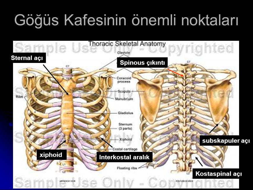 Göğüs Kafesinin önemli noktaları
