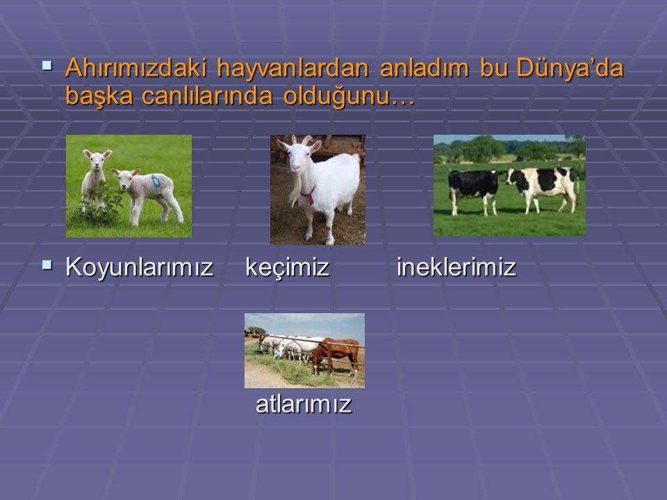 Ahırımızdaki hayvanlardan anladım bu Dünya'da başka canlılarında olduğunu…