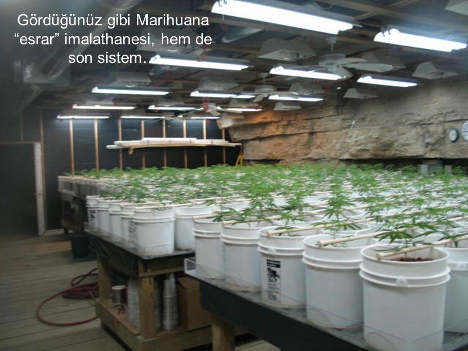 Gördüğünüz gibi Marihuana esrar imalathanesi, hem de son sistem…