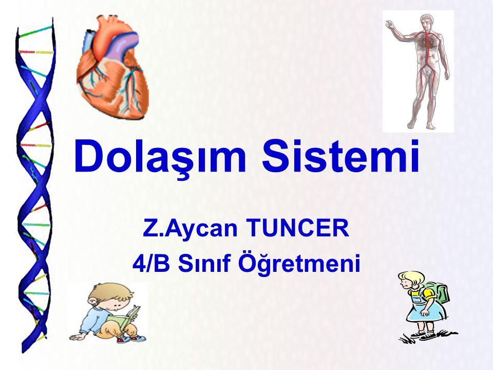 Z.Aycan TUNCER 4/B Sınıf Öğretmeni