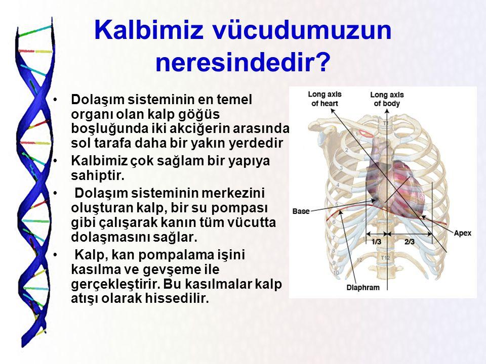 Kalbimiz vücudumuzun neresindedir
