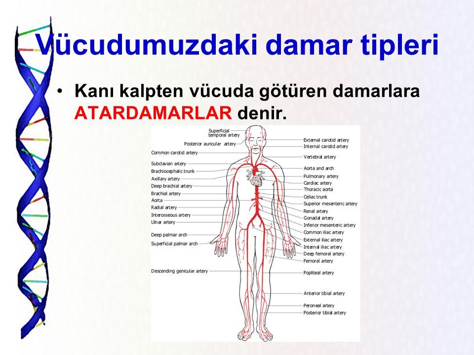 Vücudumuzdaki damar tipleri