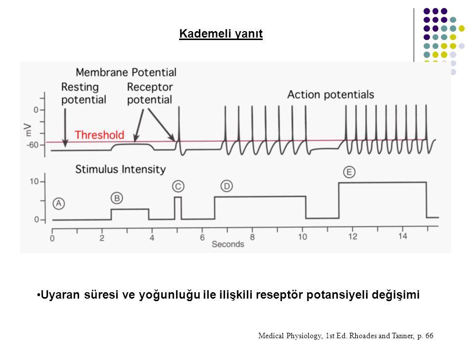 Uyaran süresi ve yoğunluğu ile ilişkili reseptör potansiyeli değişimi