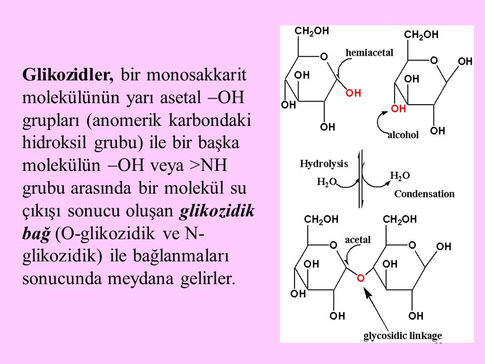 Glikozidler, bir monosakkarit molekülünün yarı asetal OH grupları (anomerik karbondaki hidroksil grubu) ile bir başka molekülün OH veya >NH grubu arasında bir molekül su çıkışı sonucu oluşan glikozidik bağ (O-glikozidik ve N-glikozidik) ile bağlanmaları sonucunda meydana gelirler.
