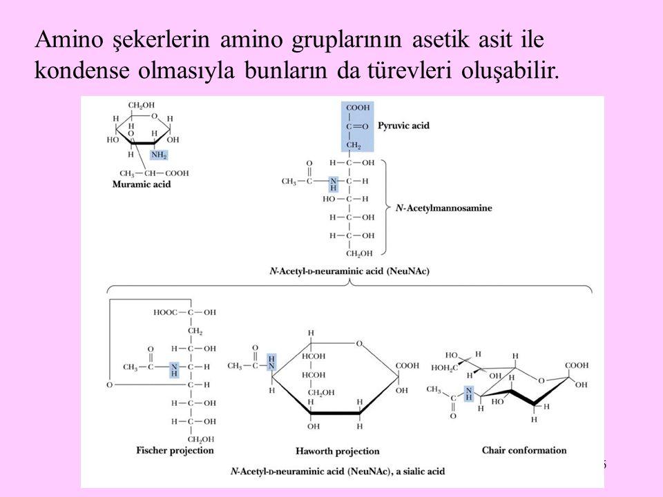Amino şekerlerin amino gruplarının asetik asit ile kondense olmasıyla bunların da türevleri oluşabilir.