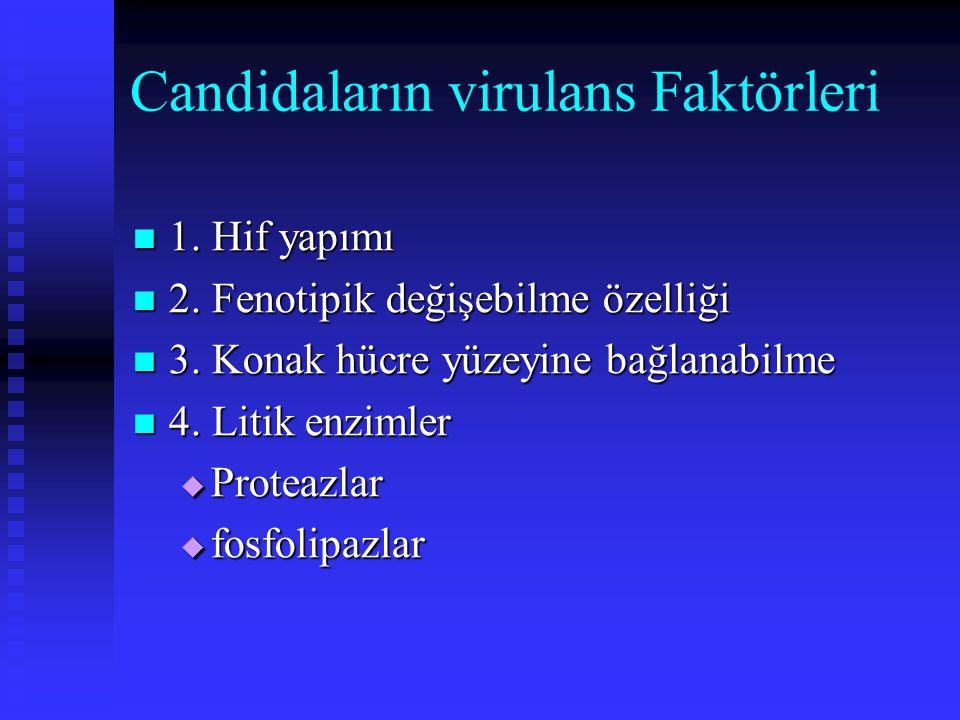 Candidaların virulans Faktörleri