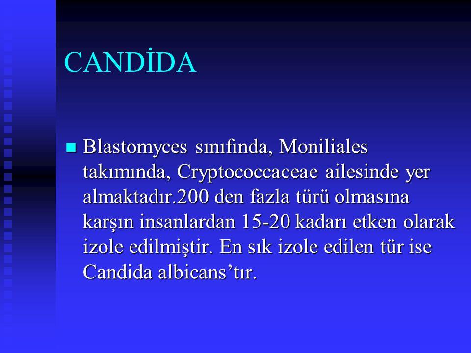 CANDİDA