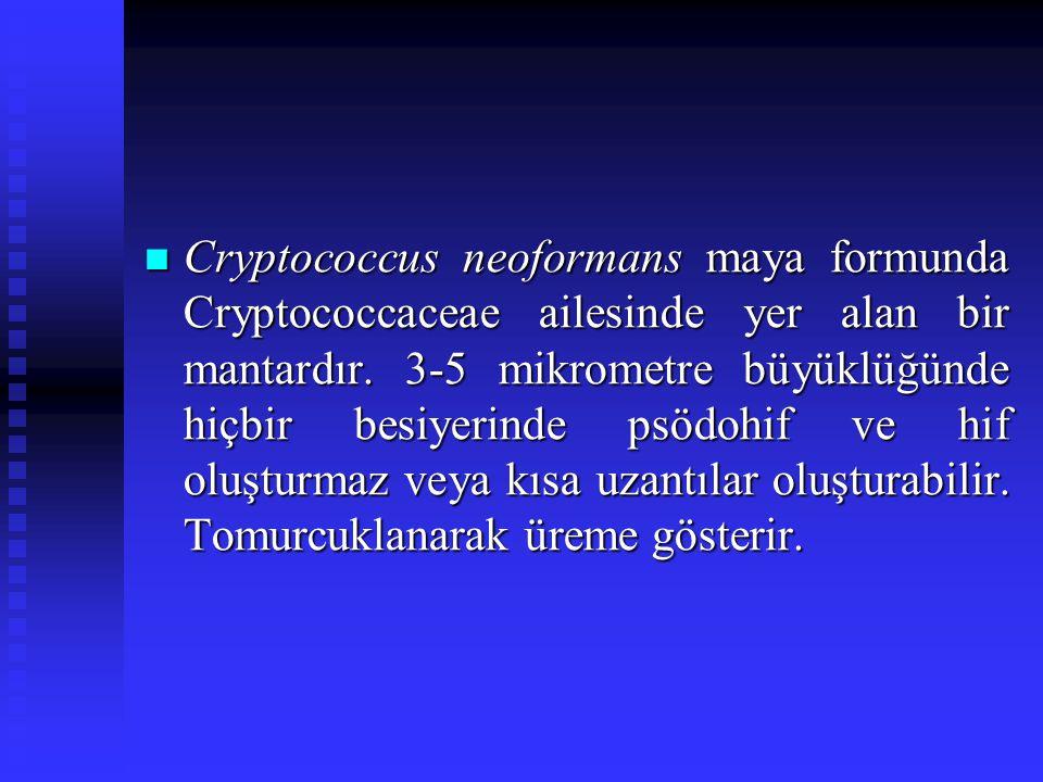 Cryptococcus neoformans maya formunda Cryptococcaceae ailesinde yer alan bir mantardır.