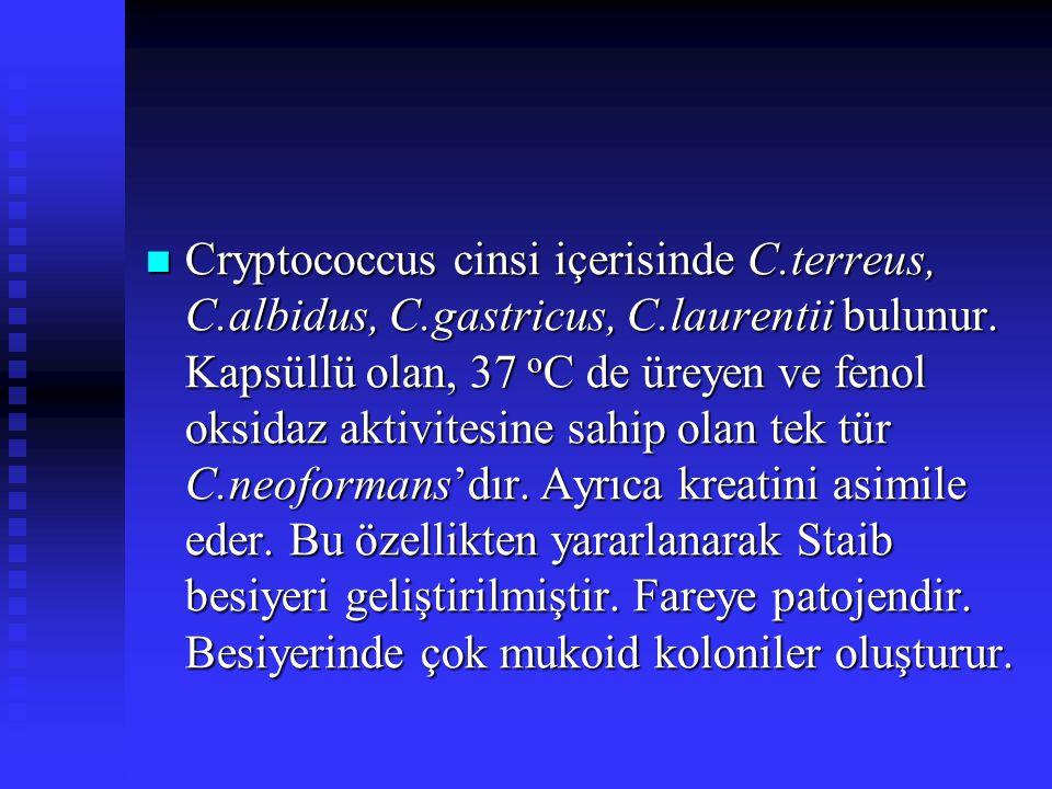 Cryptococcus cinsi içerisinde C. terreus, C. albidus, C. gastricus, C