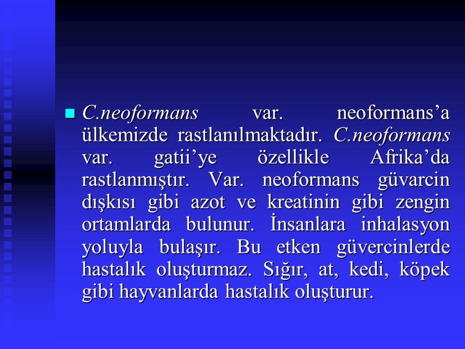 C. neoformans var. neoformans'a ülkemizde rastlanılmaktadır. C
