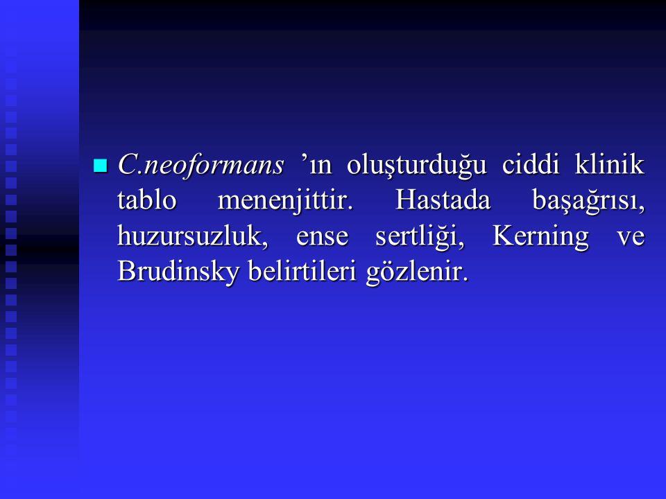 C. neoformans 'ın oluşturduğu ciddi klinik tablo menenjittir