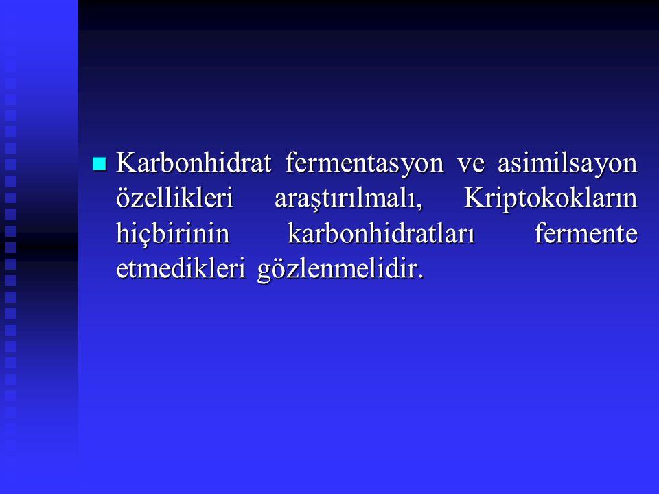 Karbonhidrat fermentasyon ve asimilsayon özellikleri araştırılmalı, Kriptokokların hiçbirinin karbonhidratları fermente etmedikleri gözlenmelidir.