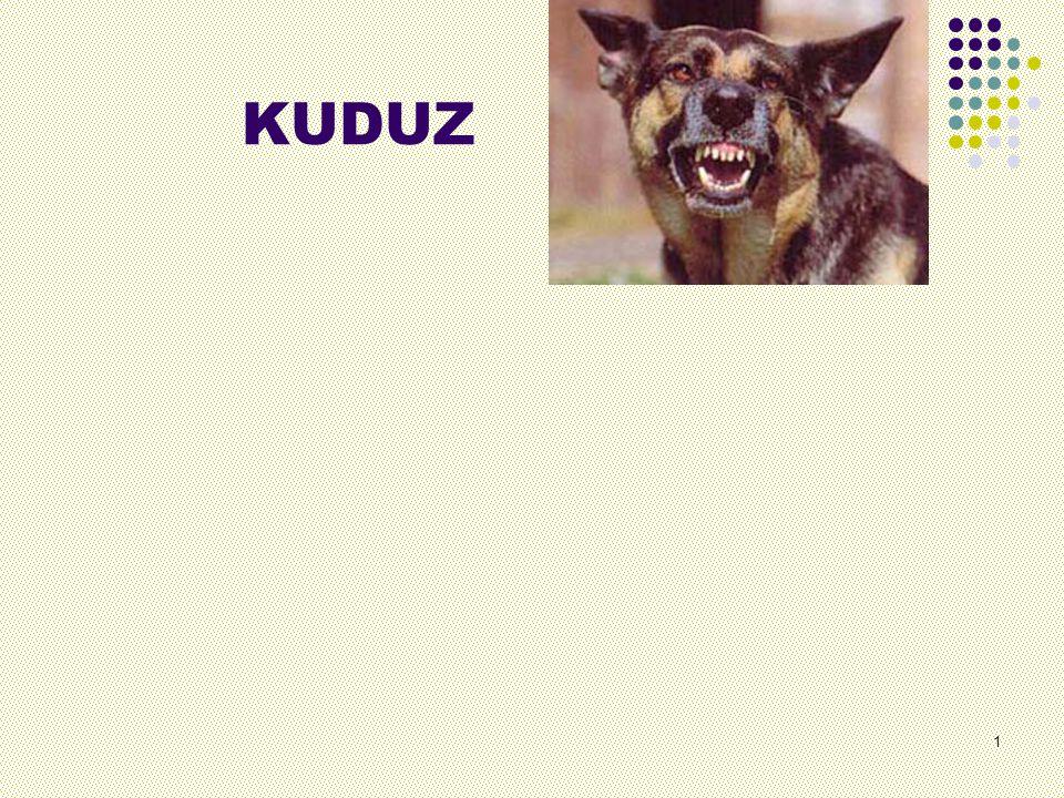 KUDUZ 1