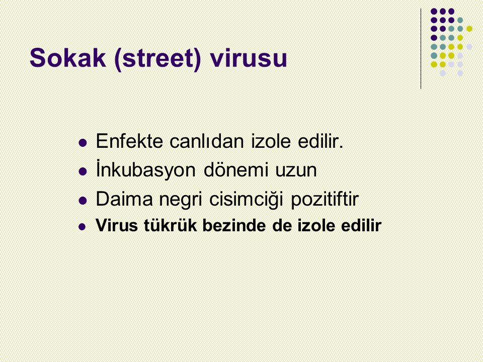 Sokak (street) virusu Enfekte canlıdan izole edilir.