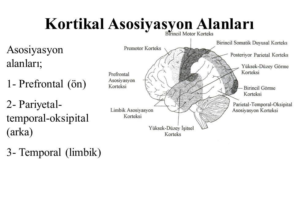 Kortikal Asosiyasyon Alanları