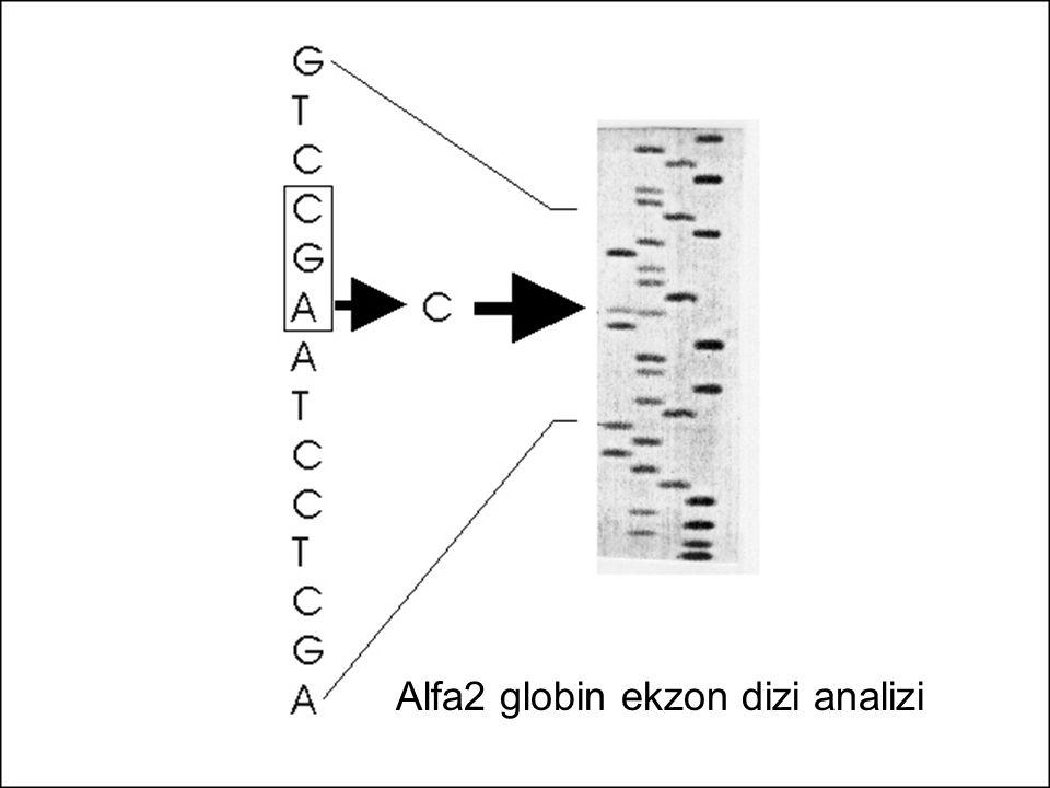 Alfa2 globin ekzon dizi analizi
