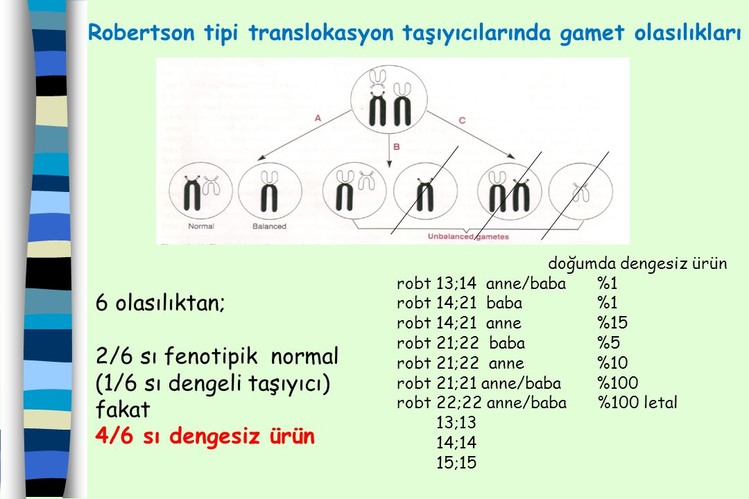 Robertson tipi translokasyon taşıyıcılarında gamet olasılıkları