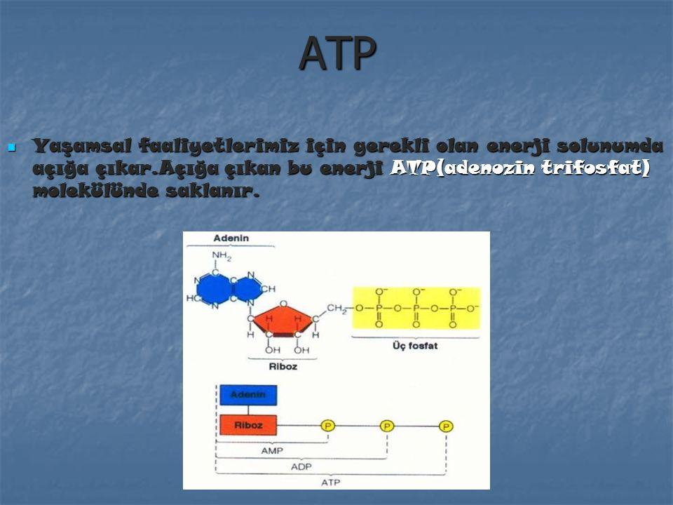 ATP Yaşamsal faaliyetlerimiz için gerekli olan enerji solunumda açığa çıkar.Açığa çıkan bu enerji ATP(adenozin trifosfat) molekülünde saklanır.
