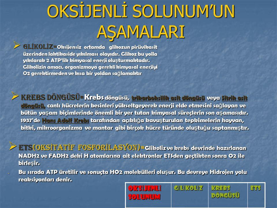 OKSİJENLİ SOLUNUM'UN AŞAMALARI