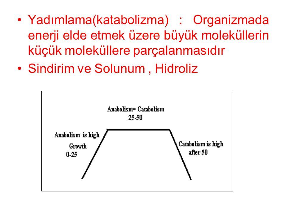 Yadımlama(katabolizma) : Organizmada enerji elde etmek üzere büyük moleküllerin küçük moleküllere parçalanmasıdır