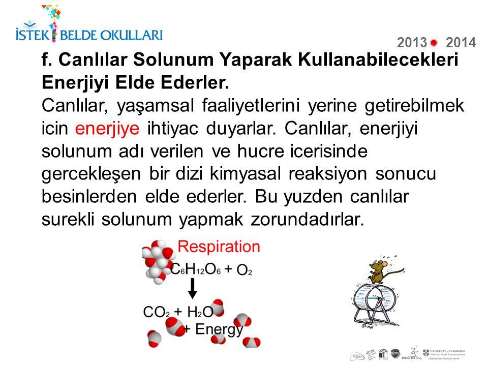f. Canlılar Solunum Yaparak Kullanabilecekleri Enerjiyi Elde Ederler.