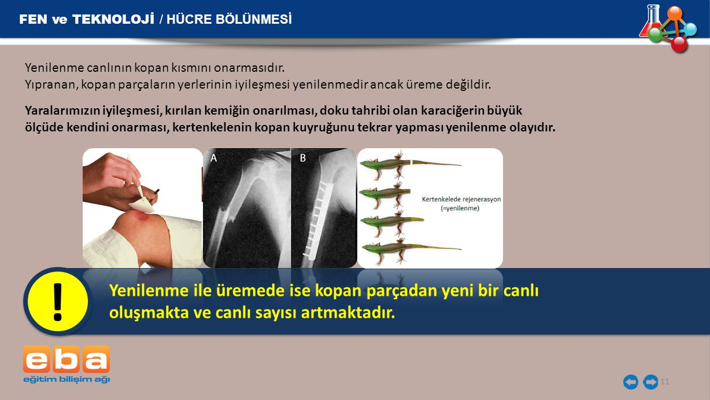! FEN ve TEKNOLOJİ / HÜCRE BÖLÜNMESİ