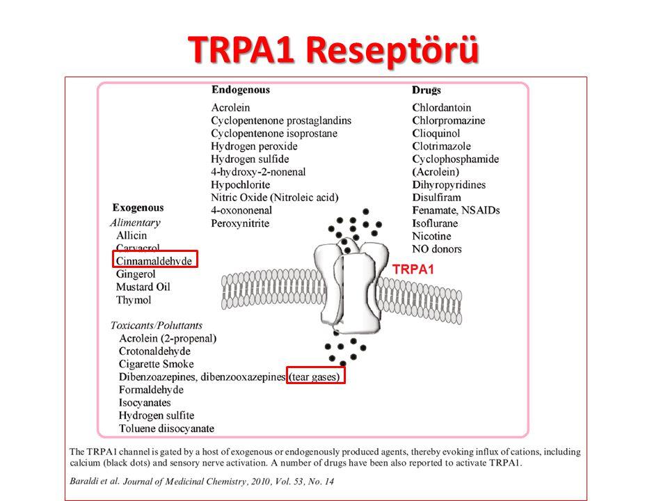 TRPA1 Reseptörü