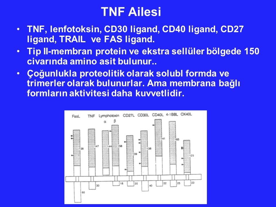 TNF Ailesi TNF, lenfotoksin, CD30 ligand, CD40 ligand, CD27 ligand, TRAIL ve FAS ligand.