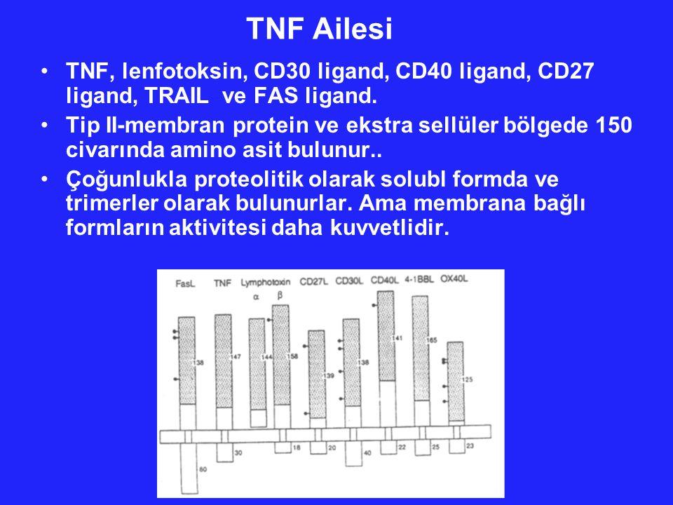 TNF Ailesi TNF, lenfotoksin, CD30 ligand, CD40 ligand, CD27 ligand, TRAIL ve FAS ligand.