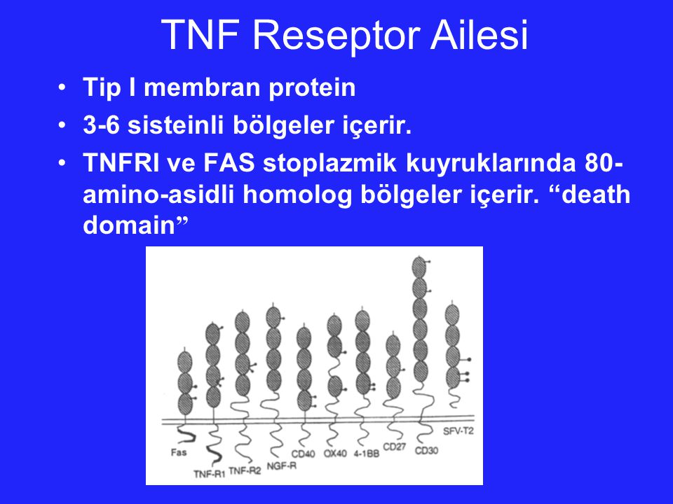 TNF Reseptor Ailesi Tip I membran protein