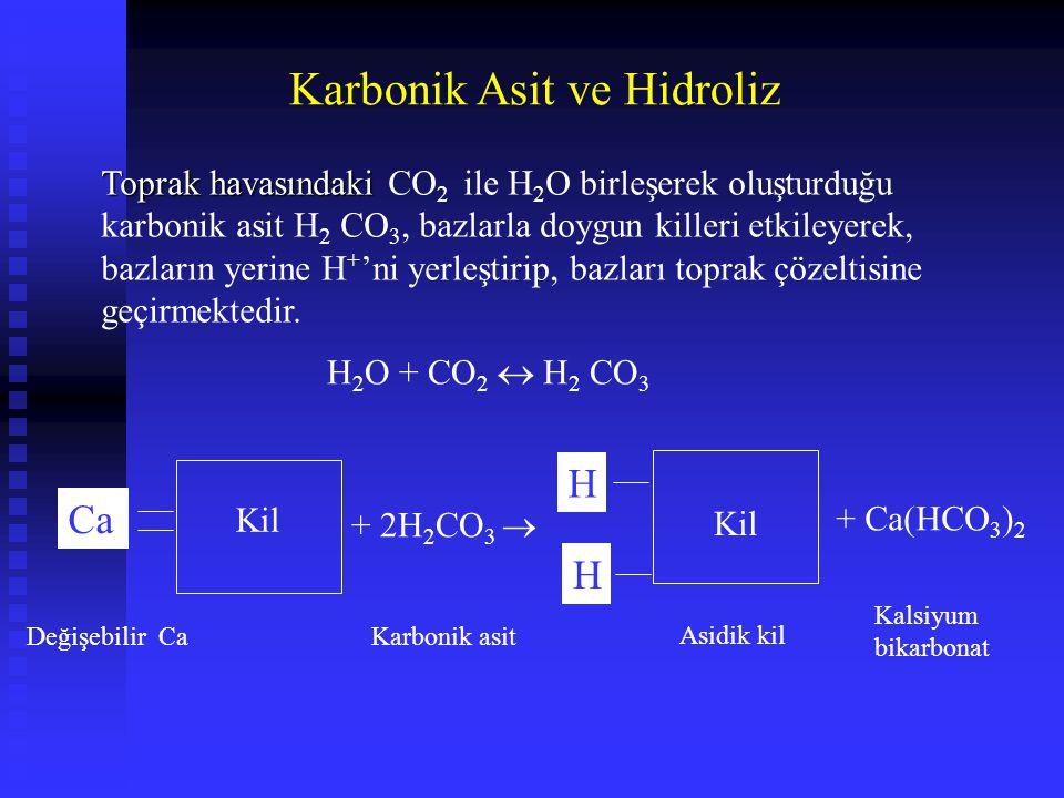 Karbonik Asit ve Hidroliz