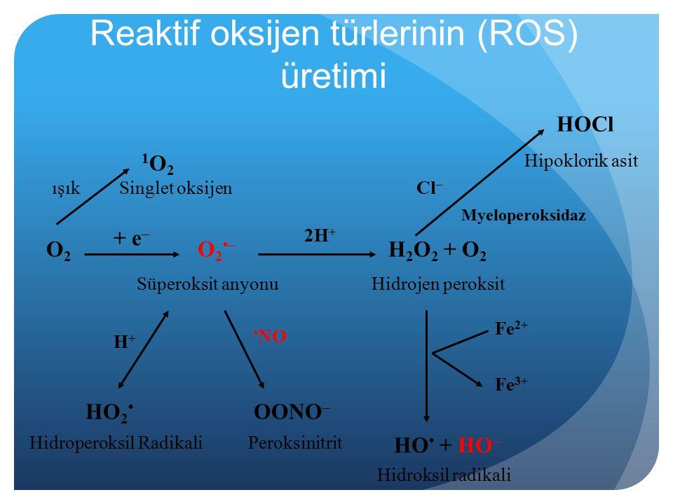 Reaktif oksijen türlerinin (ROS) üretimi