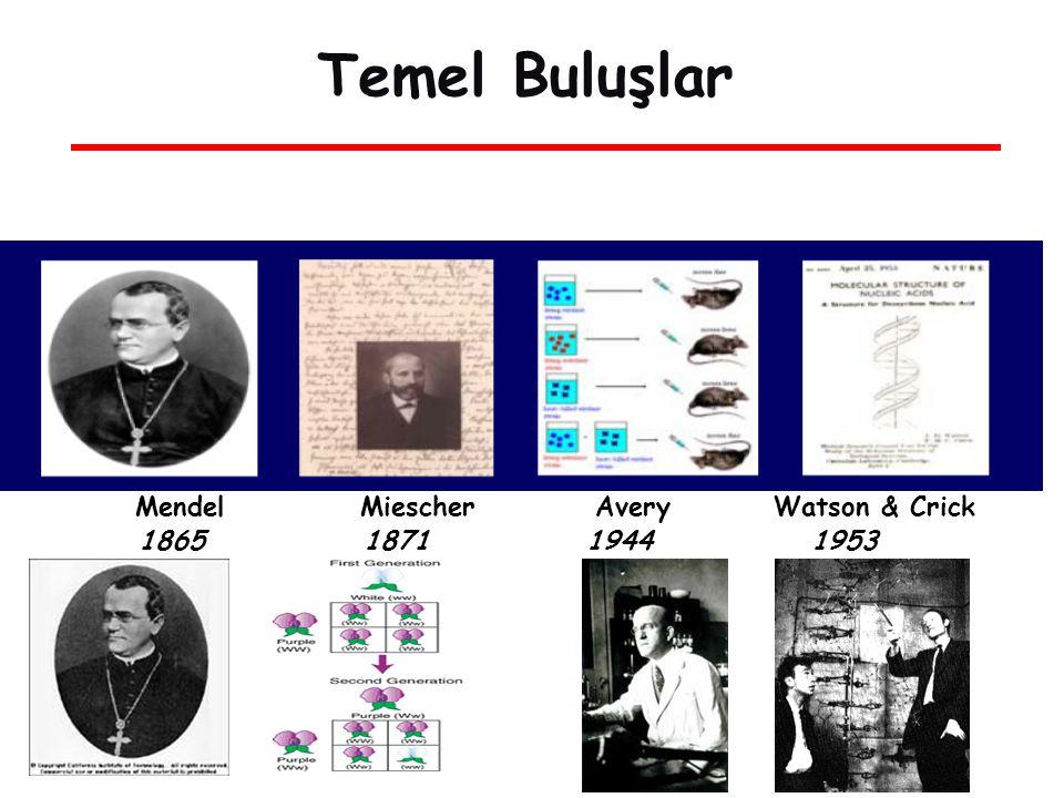 Temel Buluşlar Mendel Miescher Avery Watson & Crick