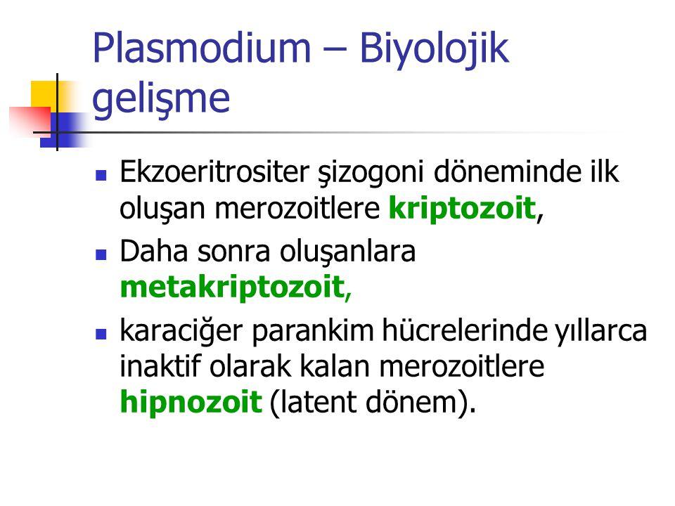 Plasmodium – Biyolojik gelişme