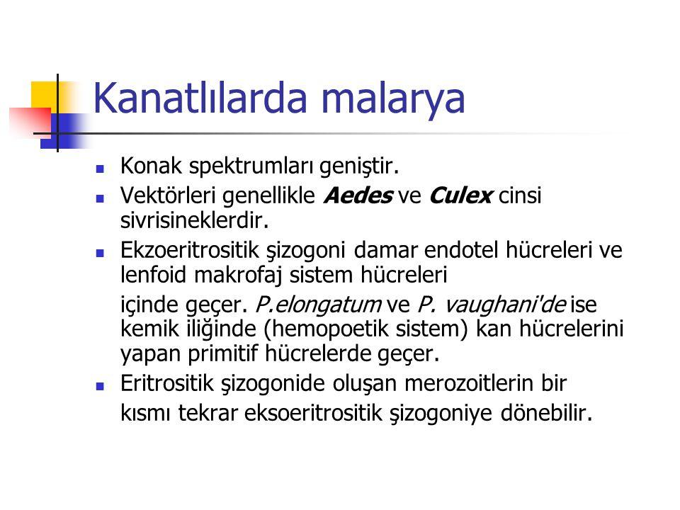 Kanatlılarda malarya Konak spektrumları geniştir.