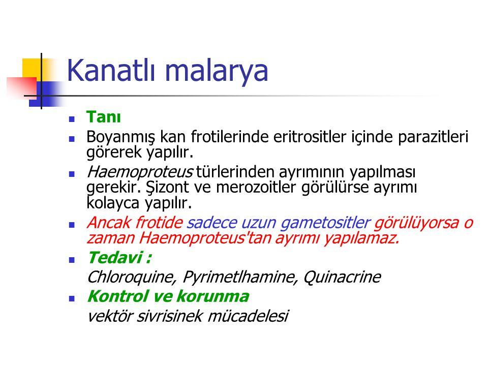 Kanatlı malarya Tanı. Boyanmış kan frotilerinde eritrositler içinde parazitleri görerek yapılır.