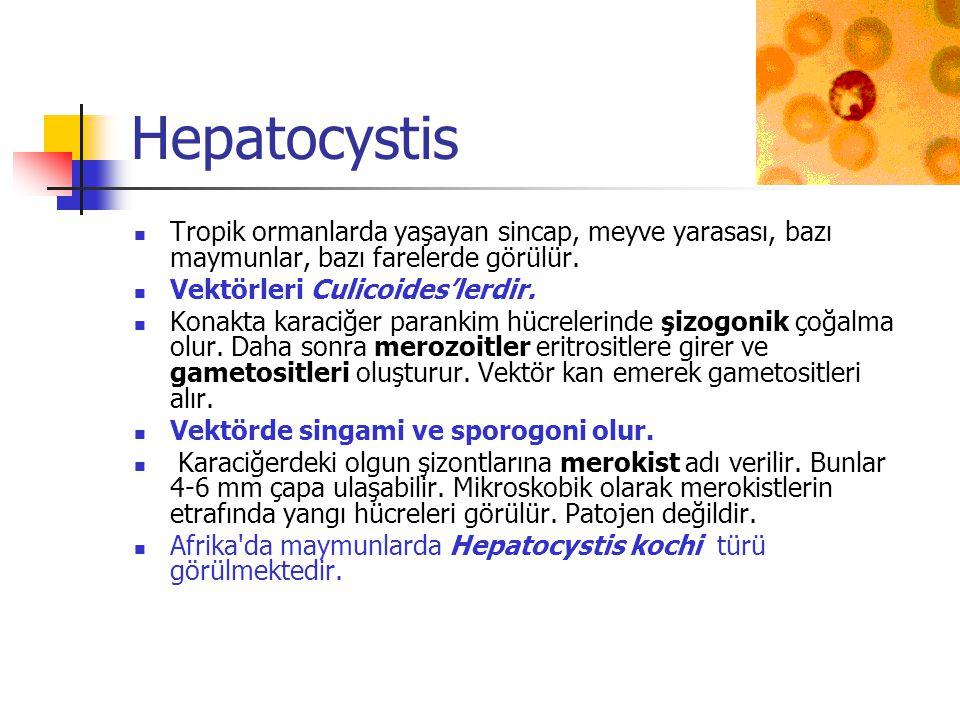 Hepatocystis Tropik ormanlarda yaşayan sincap, meyve yarasası, bazı maymunlar, bazı farelerde görülür.