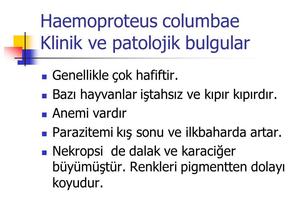 Haemoproteus columbae Klinik ve patolojik bulgular