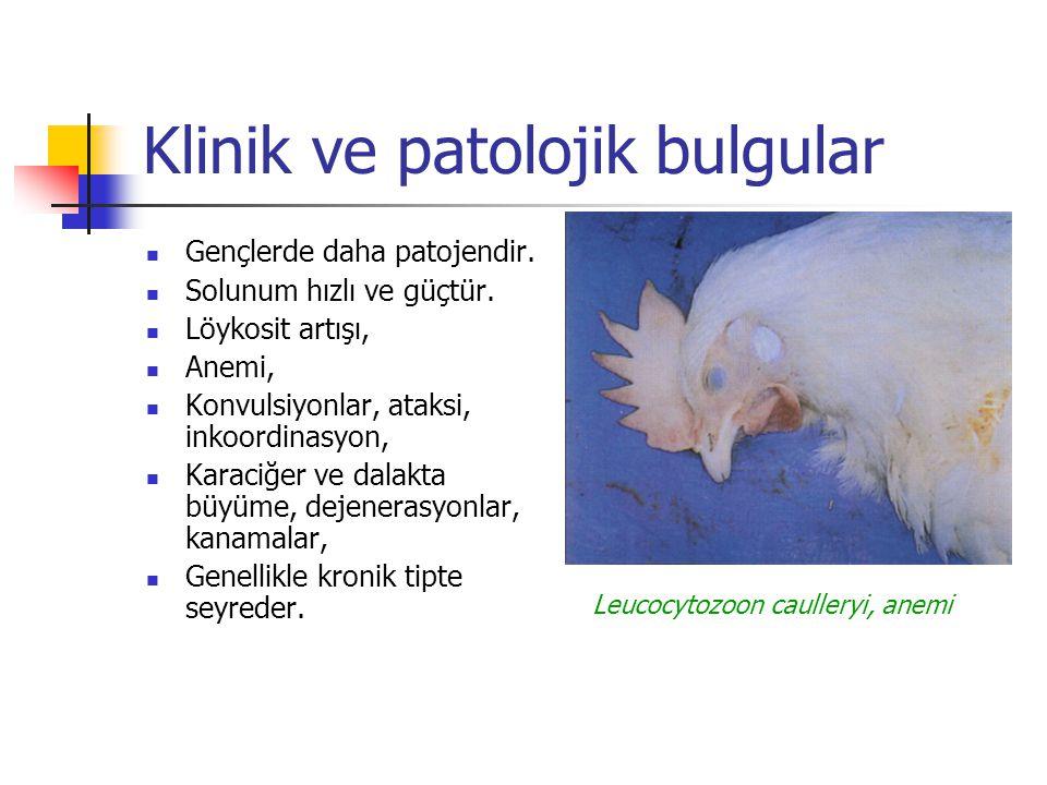 Klinik ve patolojik bulgular