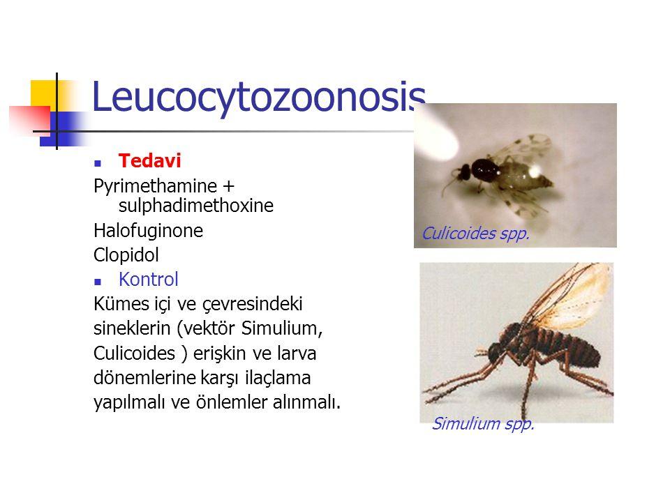 Leucocytozoonosis Tedavi Pyrimethamine + sulphadimethoxine