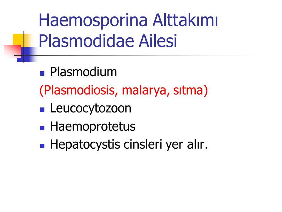 Haemosporina Alttakımı Plasmodidae Ailesi