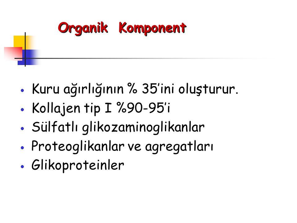 Organik Komponent Kuru ağırlığının % 35'ini oluşturur. Kollajen tip I %90-95'i. Sülfatlı glikozaminoglikanlar.