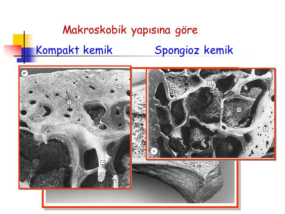 Makroskobik yapısına göre