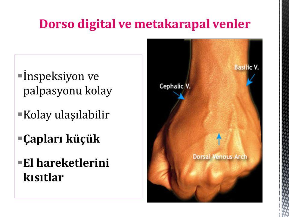 Dorso digital ve metakarapal venler