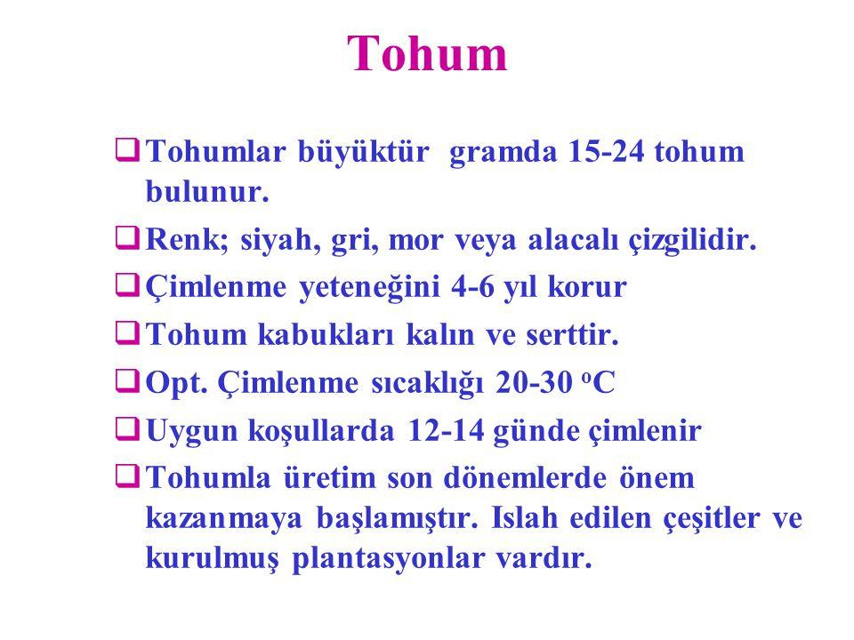 Tohum Tohumlar büyüktür gramda 15-24 tohum bulunur.