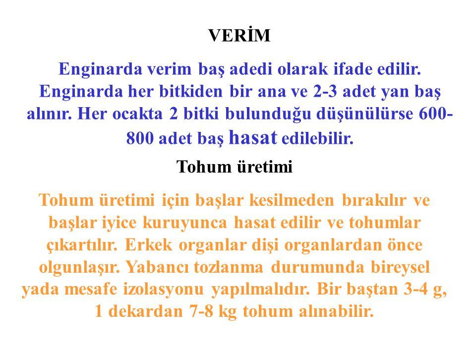 VERİM