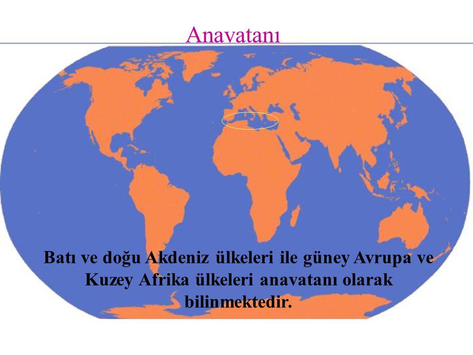 Anavatanı Batı ve doğu Akdeniz ülkeleri ile güney Avrupa ve Kuzey Afrika ülkeleri anavatanı olarak bilinmektedir.