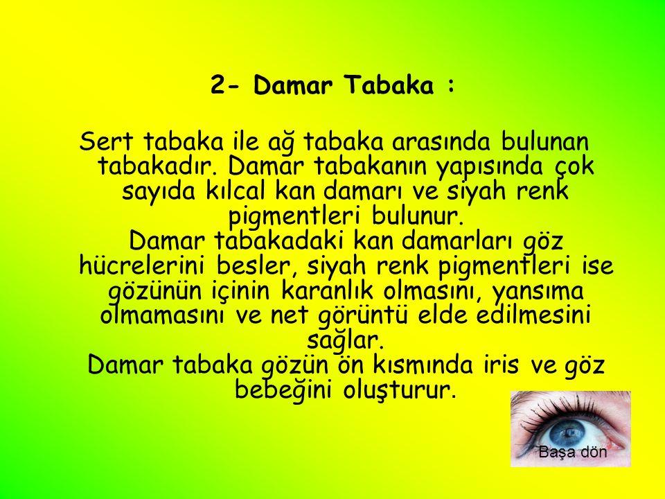2- Damar Tabaka :