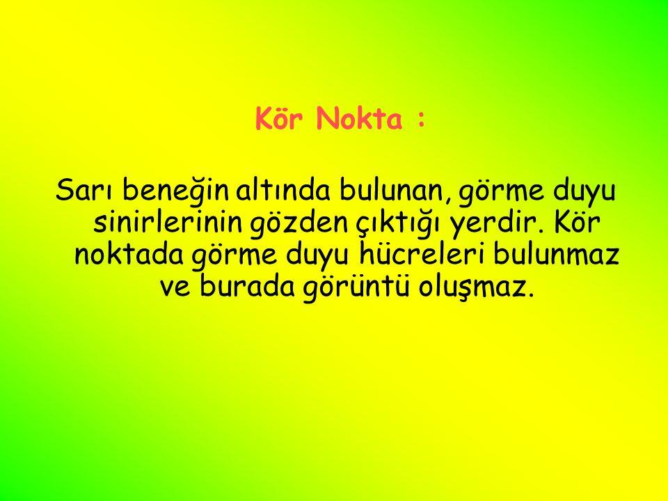 Kör Nokta :